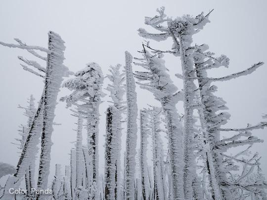 弥山は厳冬の装い